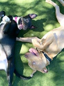 Poppy (left) playing with her buddy Bo at ACC